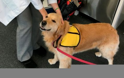Therapy Dogs to Superbugs