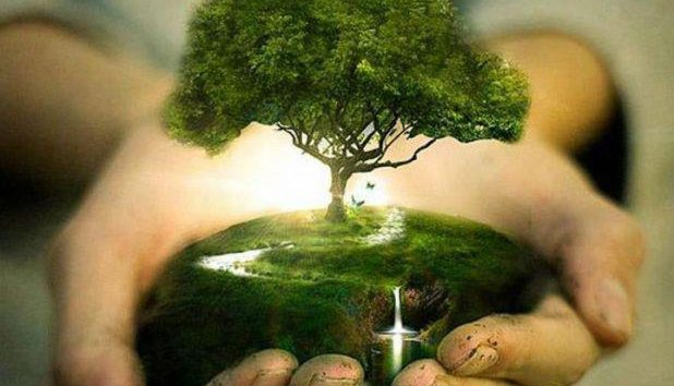 Deforestation: Save the trees