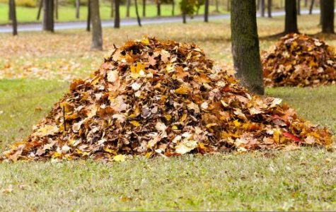 Why You Should Not Rake Your Leaves