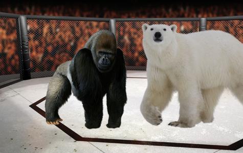 Animal Kingdom Smackdown: Gorilla V. Bear
