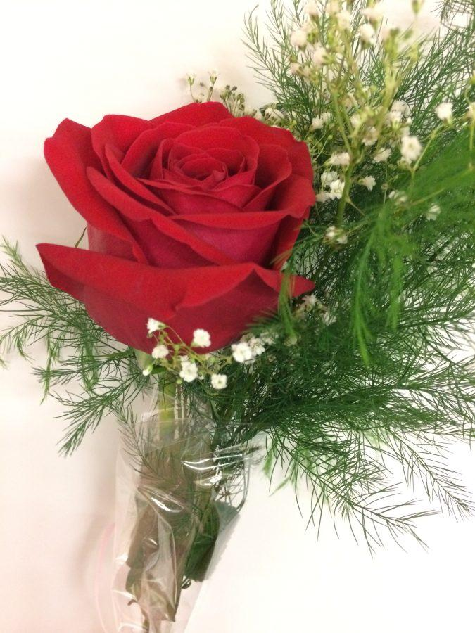 Romance+Blooms+at+Oakdale