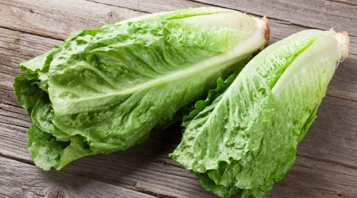 Picture of typical Romaine lettuce.