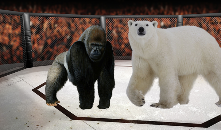 Animal+Kingdom+Smackdown+Week+1%3A+Gorilla+V.+Bear